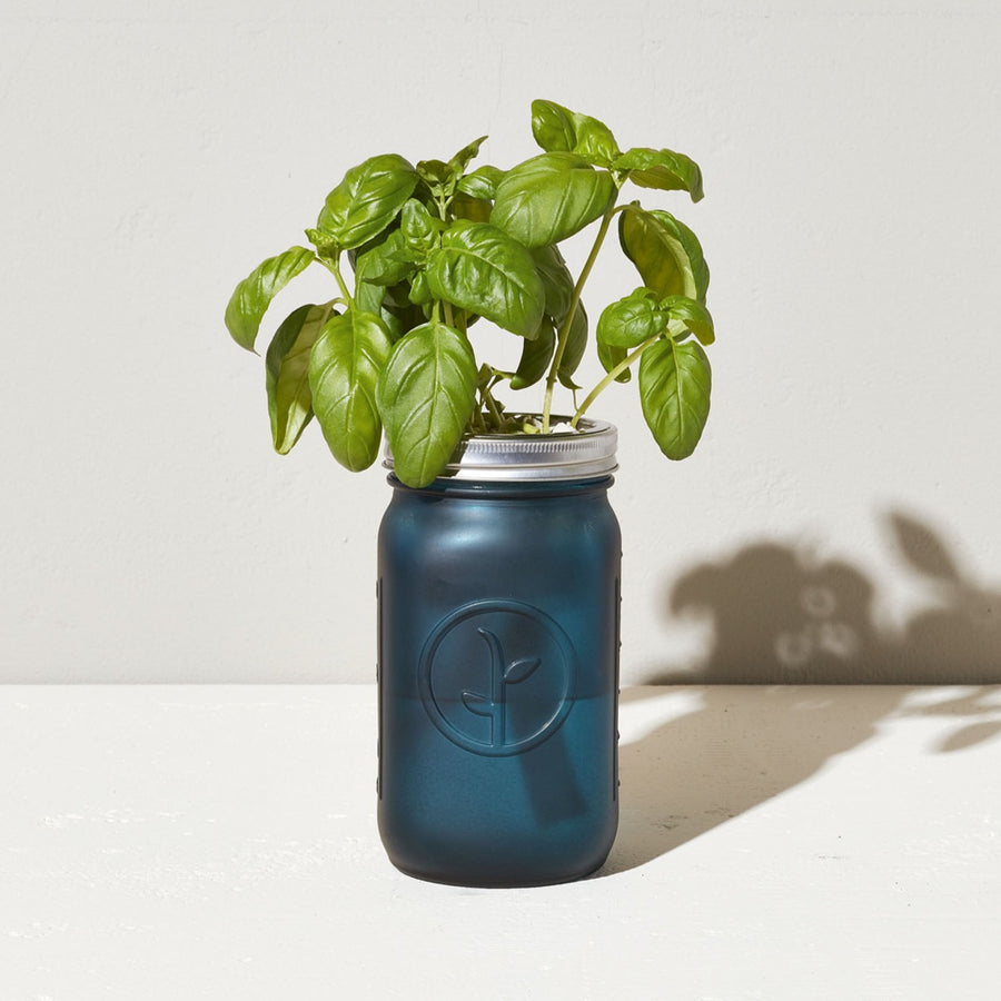 Grow Kit: Basil, Garden Jar