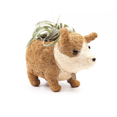 animal succulent planter - corgi