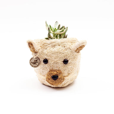 natural cat planter