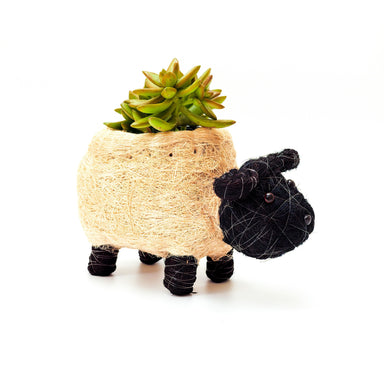 coco coir pots - sheep planter