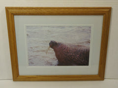 Wildfowl Art Gallery  Framed Matted Photograph Walrus 17in x 13in x 1in Vintage  Glass Paper -- Used
