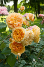 Load image into Gallery viewer, Crown Princess Margaretta