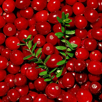 Cranberry macrocarpon - Obststrauch