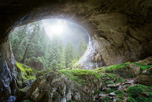 Wizard+Genius Cave In The Forest Vlies Fototapete 384x260cm 8-bahnen | Yourdecoration.de