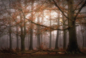 Wizard+Genius Foggy Autumn Forest Vlies Fototapete 384x260cm 8-bahnen | Yourdecoration.de