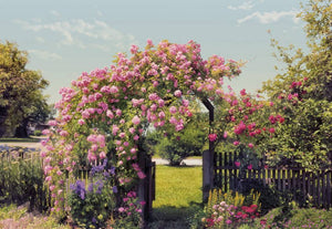 Komar Rose Garden Fototapete 368x254cm | Yourdecoration.de