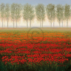 Park - Morning Mist Kunstdruck 68x68cm | Yourdecoration.de
