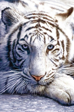 Pyramid White Tiger Poster 61x91,5cm | Yourdecoration.de