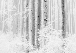 Komar Winter Wood Vlies Fototapete 400x280cm 4-bahnen | Yourdecoration.de