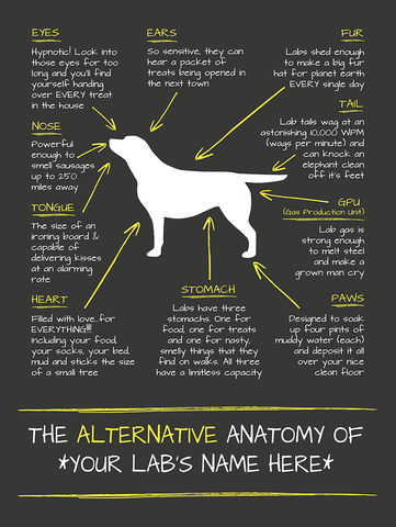 Alternative Anatomy of YOUR Labrador - Wall Art