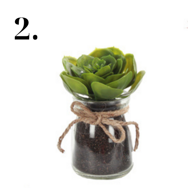 Assorted Succulent in Glass Jar
