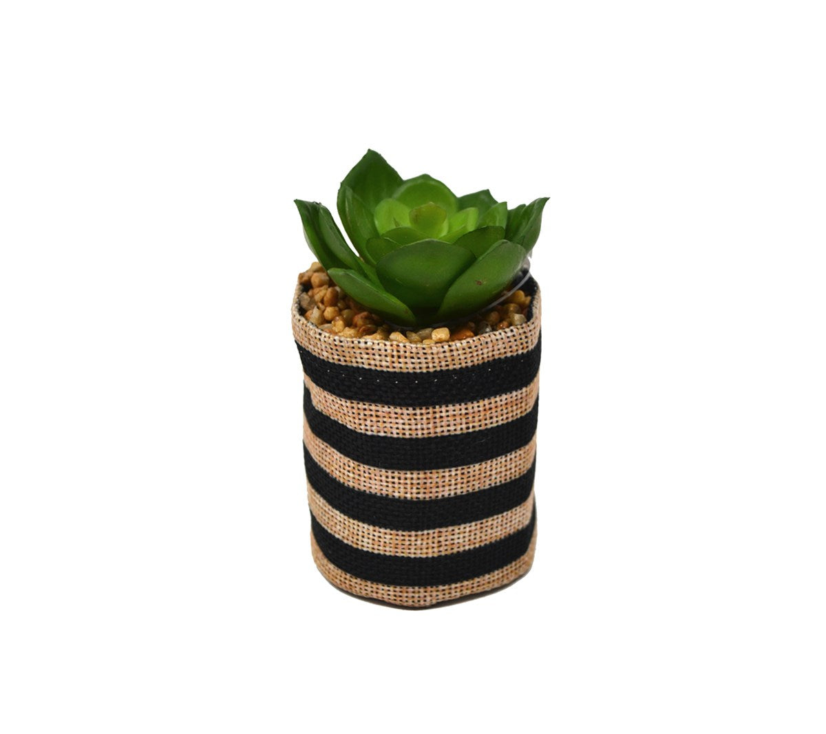 Faux Striped Succulent