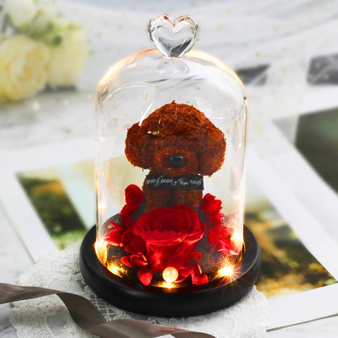 Dog Rose In Glass Dome With Lights