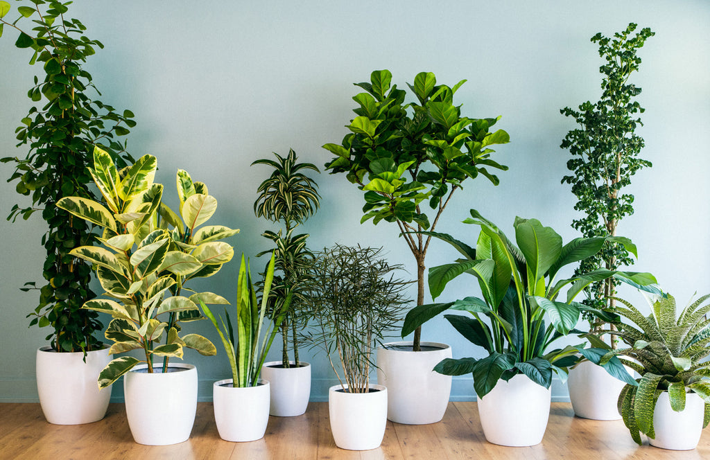 10 Ways Your House Is Making You Sick you don't have house plants
