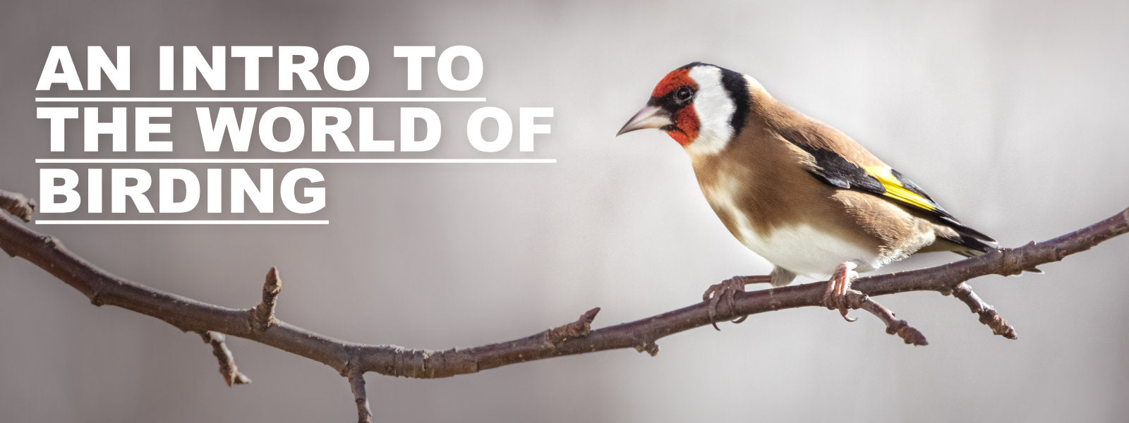 An Introduction to the World of Birding