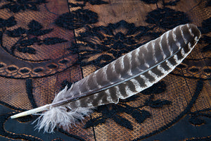 Barred Turkey Feather Smudge Tool