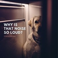 Loud noises - is your dog scared? | SnuggleDogz