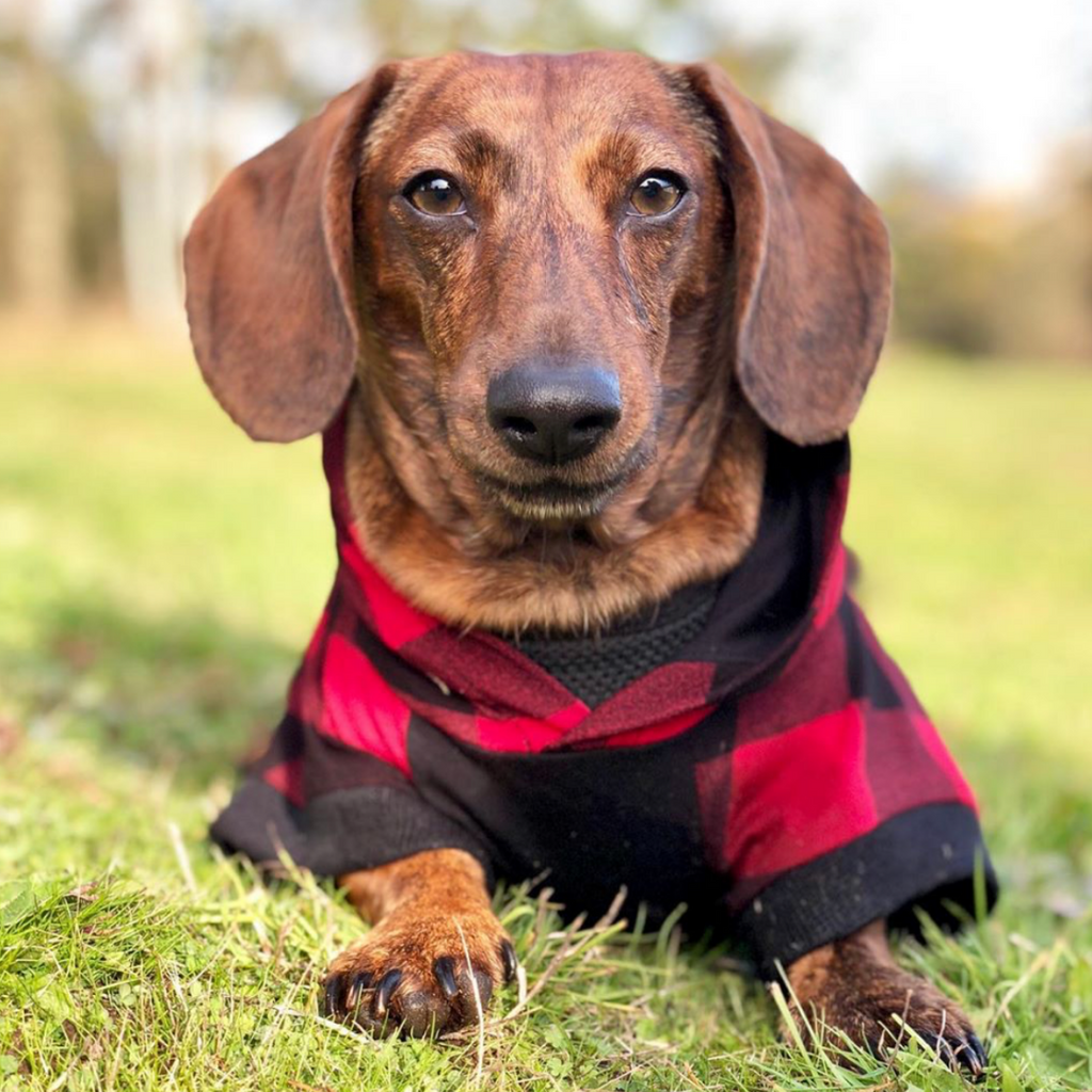 Bamboo Dog Hoodie | Red/Black Check | The Sharper Barker - SnuggleDogz