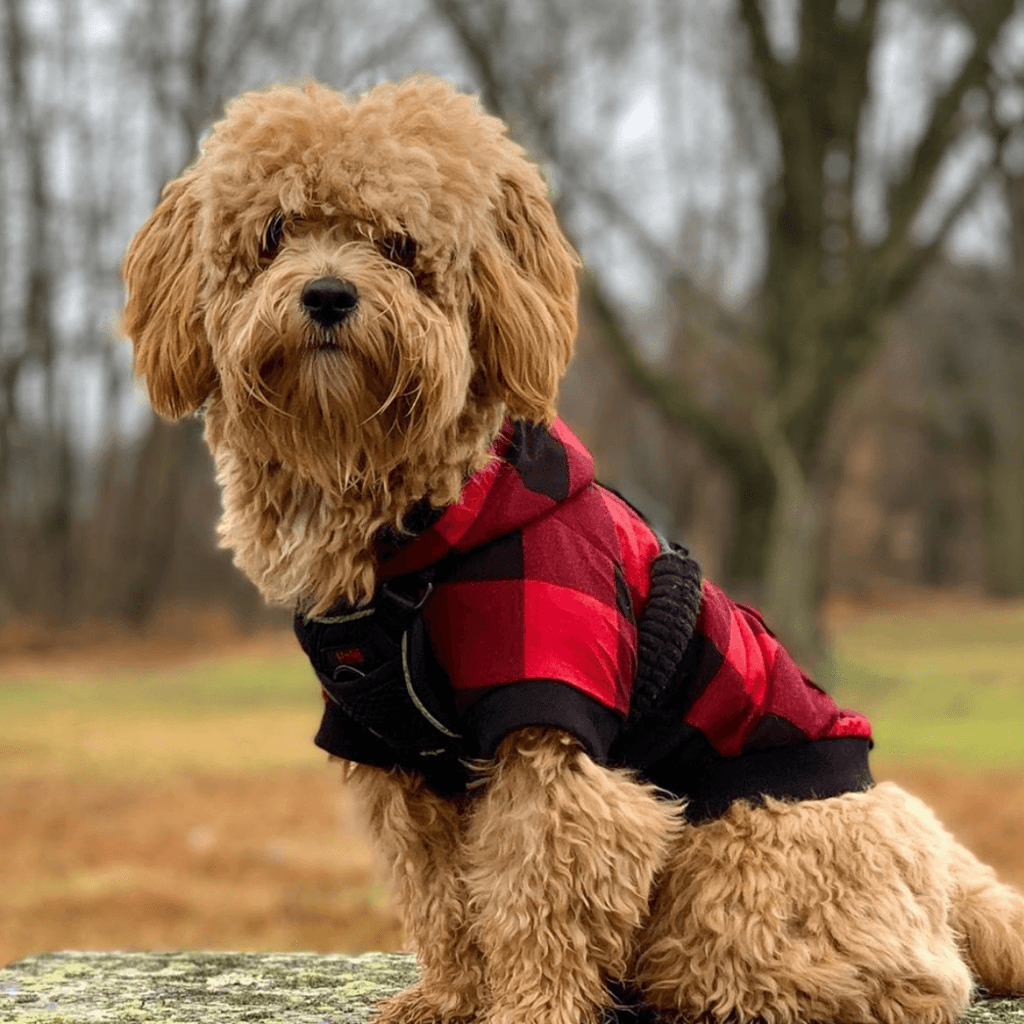 Bamboo Dog Hoodie | Red/Black Check - SnuggleDogz