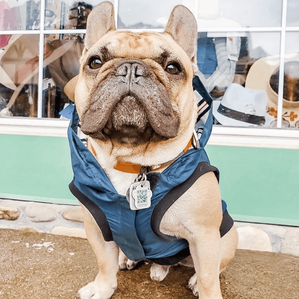 Bamboo Teal Dog Rain Jacket | Blue Stripe | The Sharper Barker - SnuggleDogz