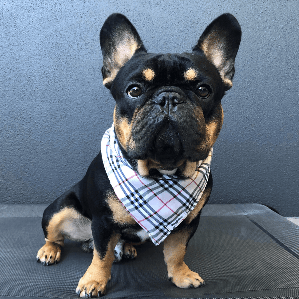 Dog Bandana Cream Check | Bold - SnuggleDogz