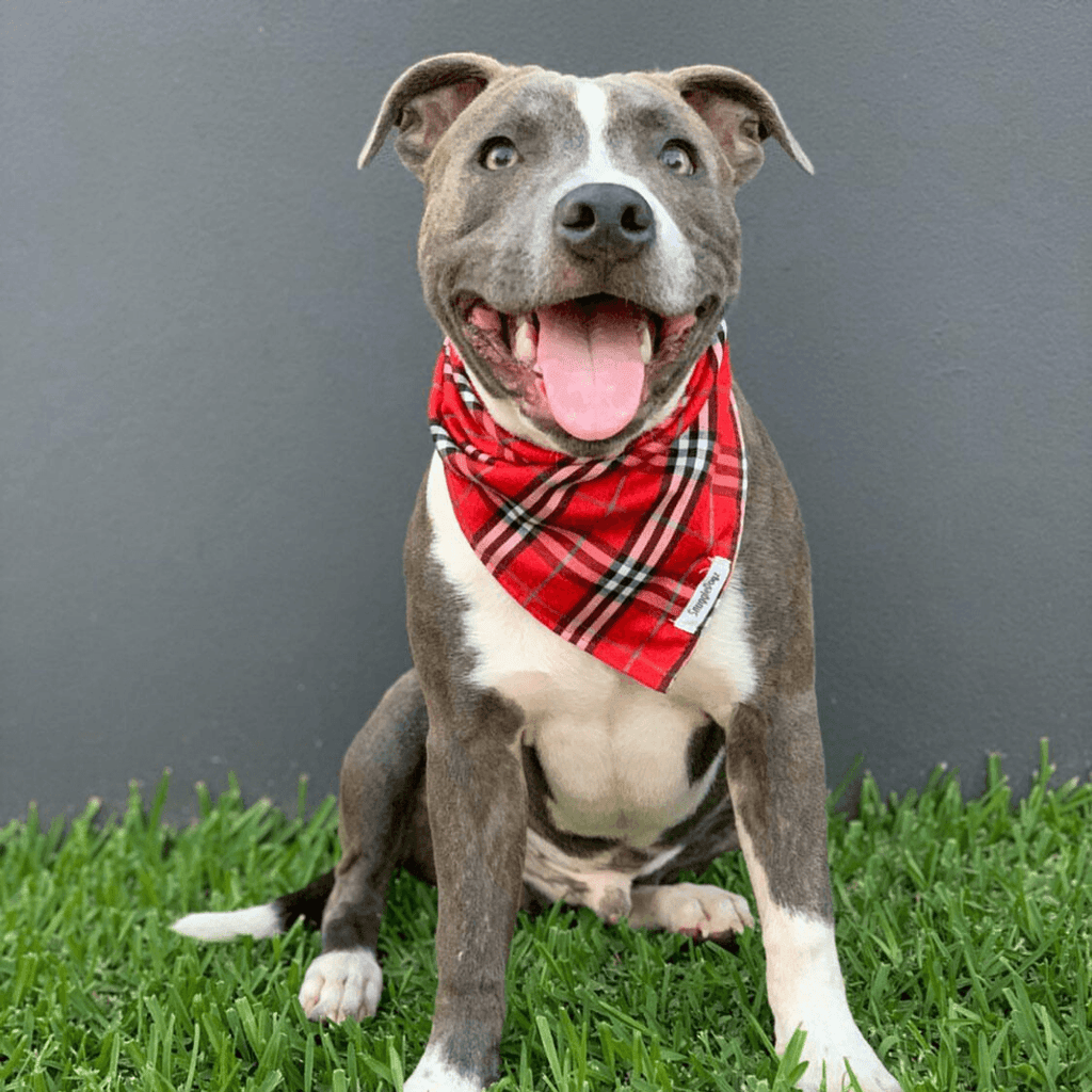 Dog Bandana Red Check | Bold - SnuggleDogz