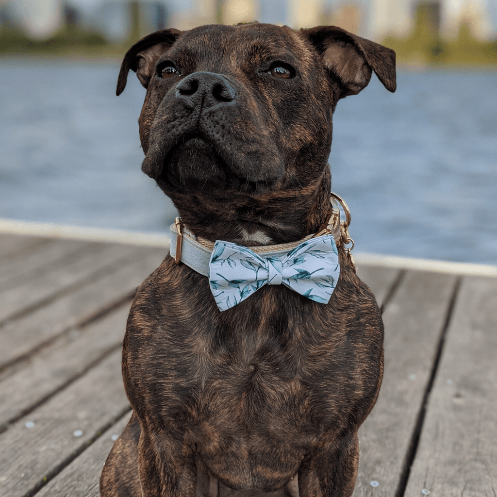 Dog Bow Tie Green Leaf | Refined - SnuggleDogz