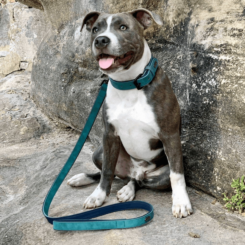 Dog Collar Cool Aqua | Loyal - SnuggleDogz