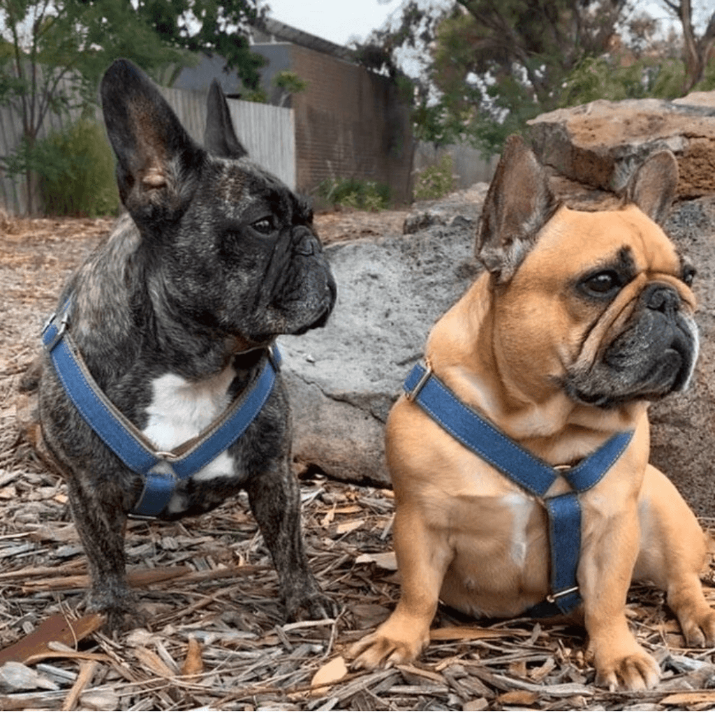 Dog Harness Dark Denim | Timeless - SnuggleDogz