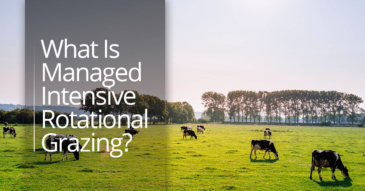 What Is Managed Intensive Rotational Grazing?