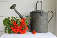 SOLD, SOLD, SOLD, SOLD, Watering Can - 2 Gallons
