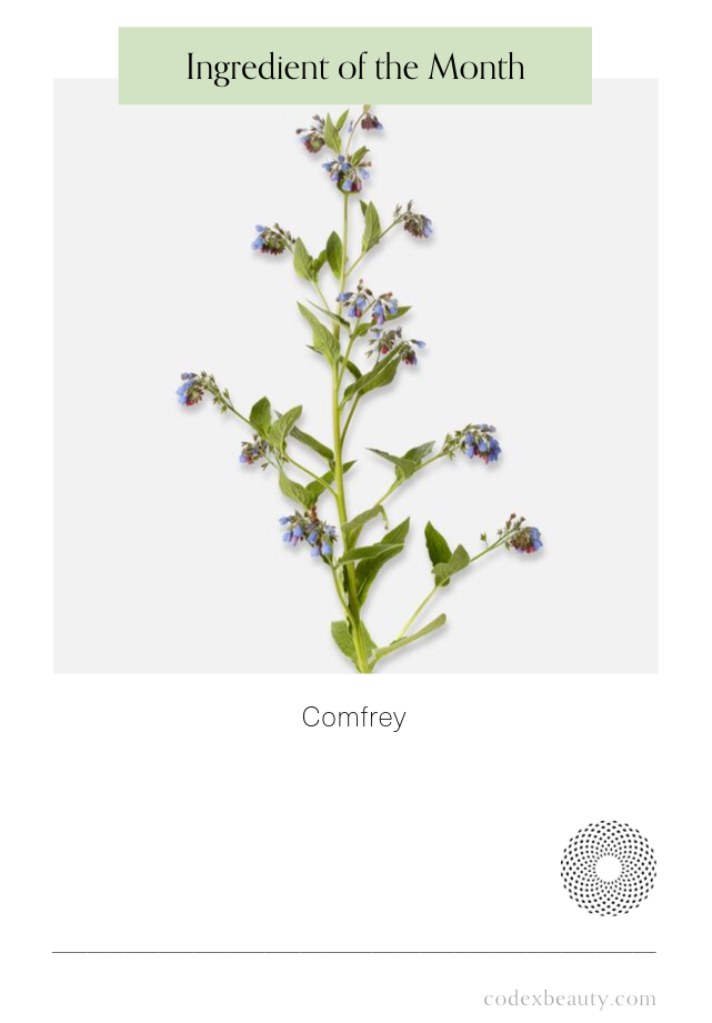 Ingredient of the Month: Comfrey