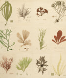 SEA PLANTS, by John Derian