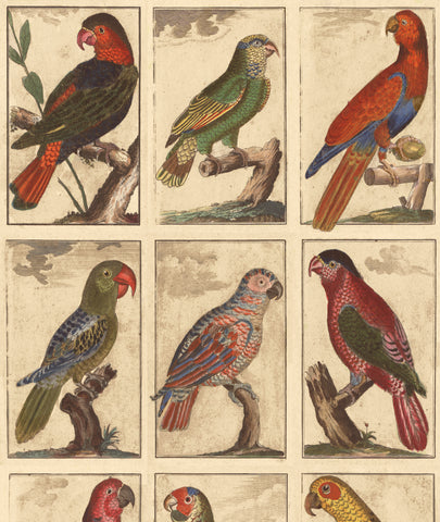 TROPICAL BIRDS, by John Derian