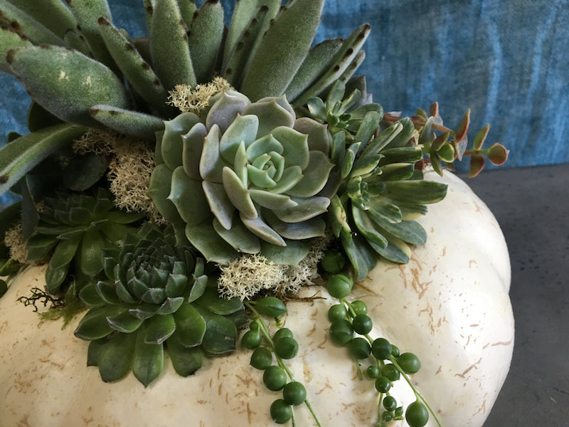 How To Make a Succulent Pumpkin Centerpiece