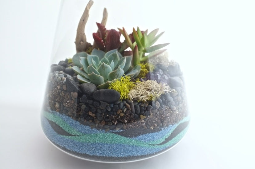 How To Make A Sand Terrarium
