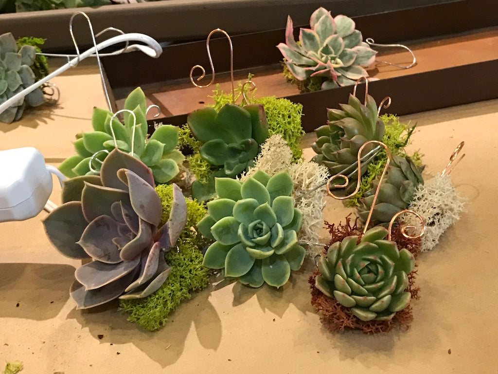 How To Make A Succulent Ornament