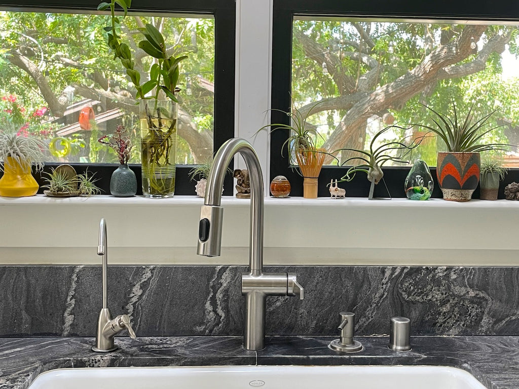 Air plants and plant cutting in a window sill above a kitchen sink.