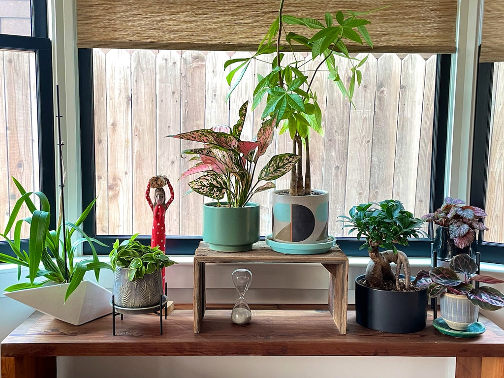 Several houseplants in a dining room window.