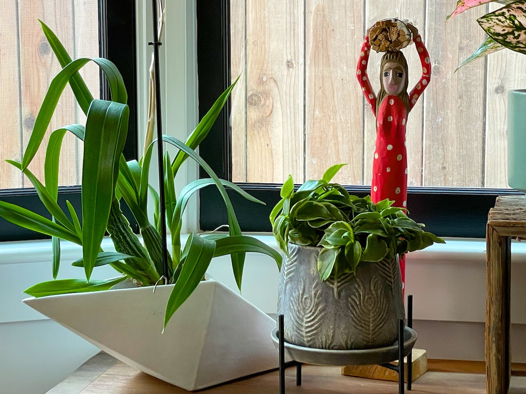 A grouping of plants and objects in a dining room.