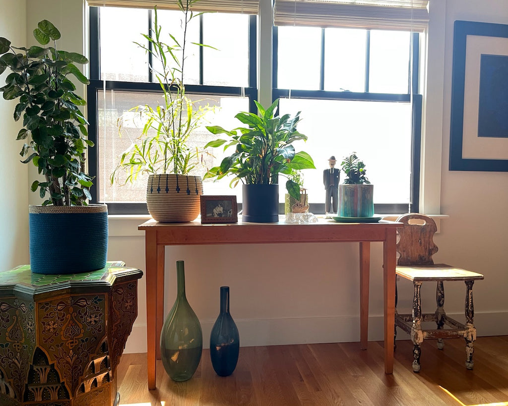 A houseplant collection in an upper hallway.