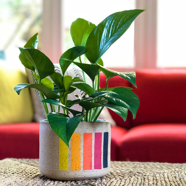 Handmade planter with speckled clay and vertical lines or dashes with warm color tones. Planter has a green pothos houseplant in front of a red couch.