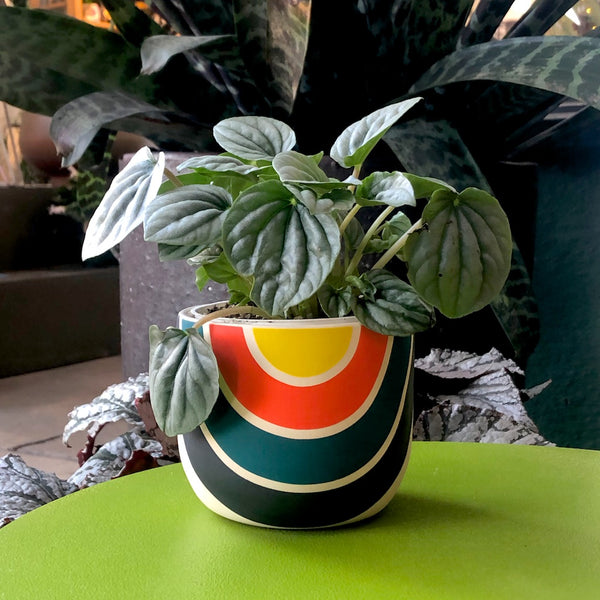 Black Mountain Handmade Planter in Happy Yellow style with plant.