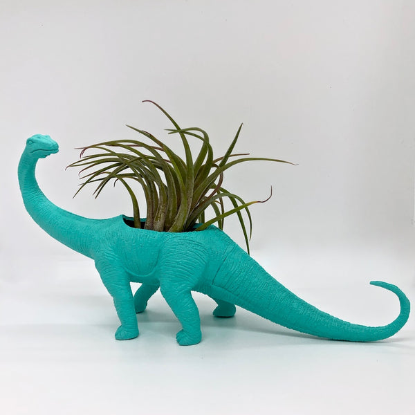 Lite turquoise Apatosaurus toy planter planted with an air plant.