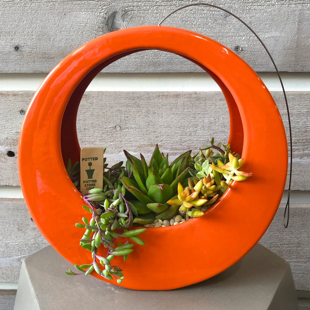 Orange Circle pot by Potted filled with succulents.