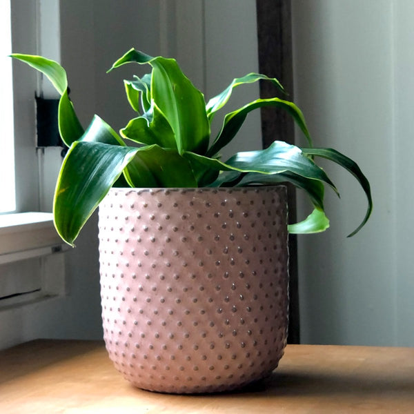 Cute pink planter with raised dots.