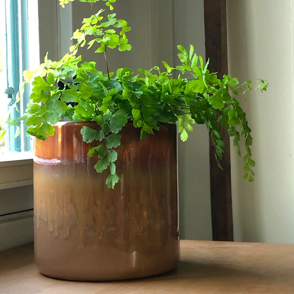 Curry Colored Drip-Glaze Cylinder Planter with a maiden hair fern.
