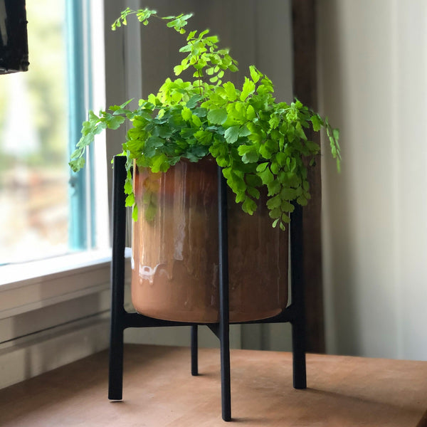 Curry Colored Drip-Glaze Cylinder Planter with a maiden hair fern in a black plant stand.