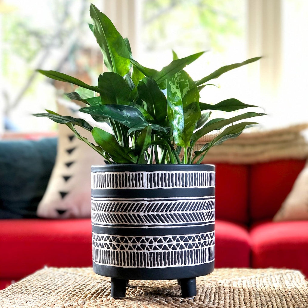 Matte black planter with white lines in a tribal pattern.