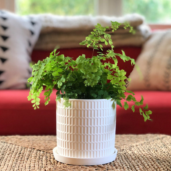 Modern white cylinder planter with grid pattern embossed.